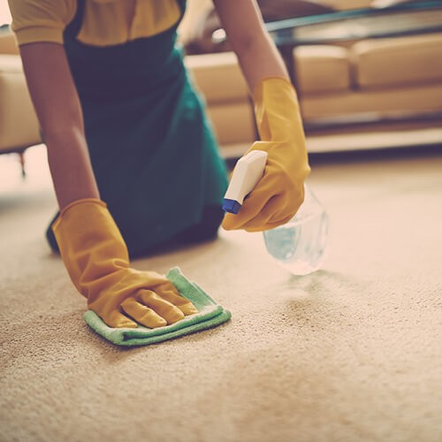 Carpet cleaning | Magic Carpets